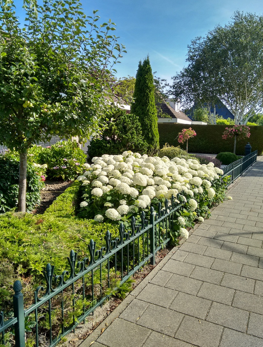 Hortensiat hollantilaisella pihalla